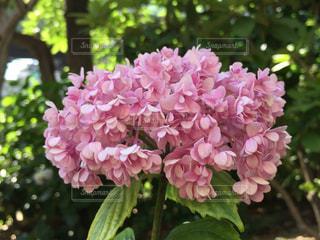 近くの花のアップの写真・画像素材[1219681]