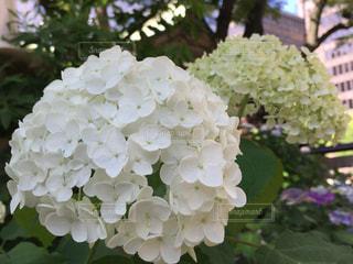 近くの花のアップの写真・画像素材[1219682]