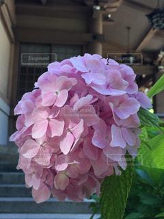 ピンクの花で一杯の花瓶の写真・画像素材[1219686]