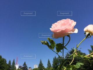 近くの花のアップの写真・画像素材[1233469]