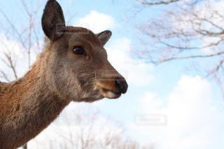 カメラを見て動物の写真・画像素材[1246222]