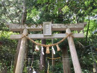 木の棒の写真・画像素材[1254440]