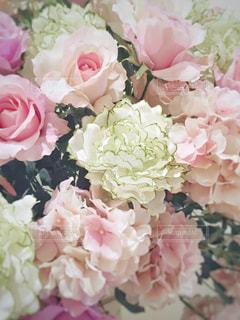 花のアップの写真・画像素材[1863581]