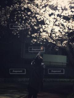 夜桜の写真・画像素材[1999836]