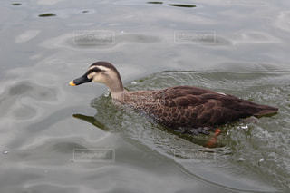 鳥の写真・画像素材[696975]