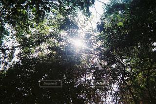 自然 - No.148865