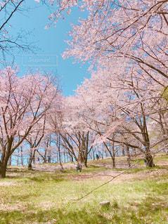 春の写真・画像素材[699293]