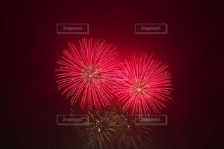 花火の写真・画像素材[697685]