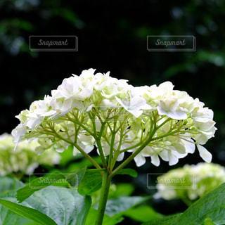 花の写真・画像素材[699689]
