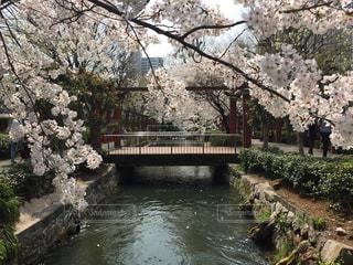 街中の桜の写真・画像素材[1137470]