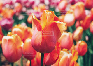 近くの花のアップの写真・画像素材[1169930]