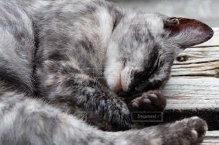 近くに眠っている猫のアップの写真・画像素材[1460990]