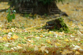 草の上に座ってピザ カバー フィールドの写真・画像素材[1473112]
