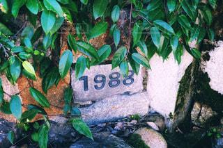 1988の写真・画像素材[1609353]