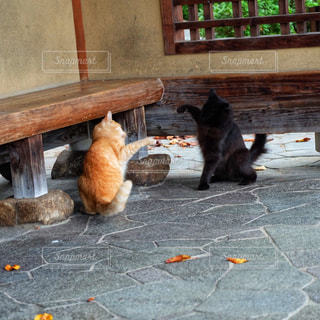 ベンチに座って猫の写真・画像素材[1687410]