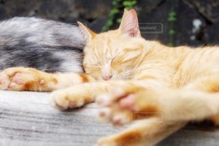 地面に横になっている猫の写真・画像素材[1687719]