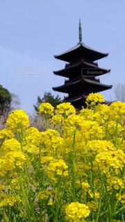 吉備路の春の写真・画像素材[1692053]