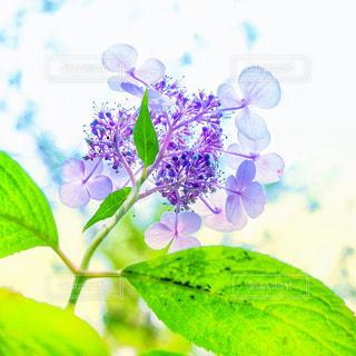 花の写真・画像素材[2242173]