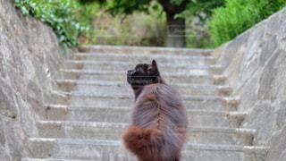 猫の後ろ姿 その2の写真・画像素材[2268106]