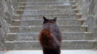 猫の後ろ姿の写真・画像素材[2268107]
