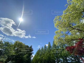 森の中の大きな木の写真・画像素材[3218616]