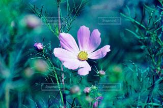 花のクローズアップの写真・画像素材[3707345]