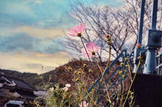 故郷の風景の写真・画像素材[3710649]