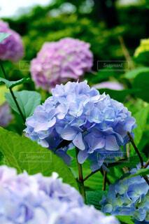 花のクローズアップの写真・画像素材[4552666]