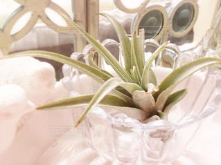 植物の写真・画像素材[699159]