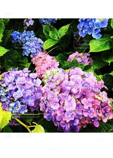 庭の写真・画像素材[699283]