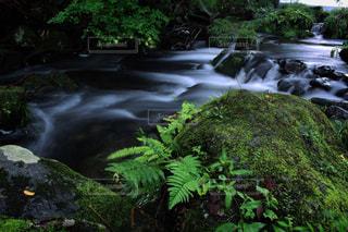 渓流に癒されて・・・。の写真・画像素材[699517]