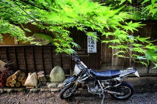 新緑の紅葉・・・古民家・・・旅の写真・画像素材[699563]