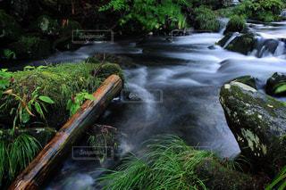 雨あがりのしっとり渓流。の写真・画像素材[699712]