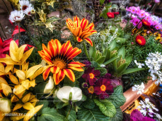 カラフルな花💐の寄せ植えの写真・画像素材[1088424]