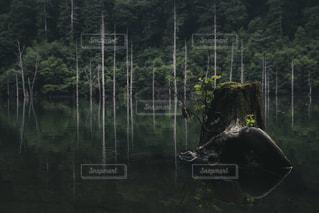 森の主、枯木の写真・画像素材[2381355]
