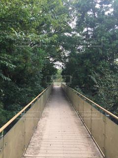 橋の側に木にパスの写真・画像素材[705711]