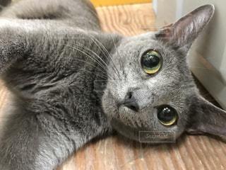 猫 - No.699760