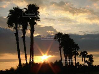 夕日の写真・画像素材[703882]