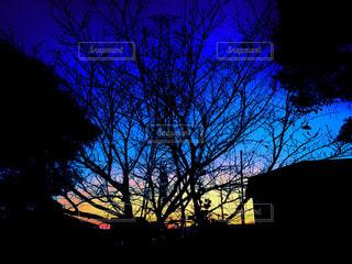 大きな木の写真・画像素材[842397]