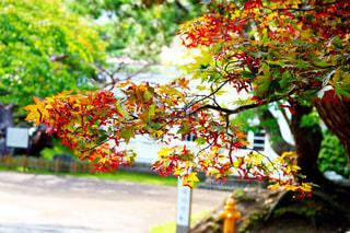 紅葉が色づくこの季節 - No.800928