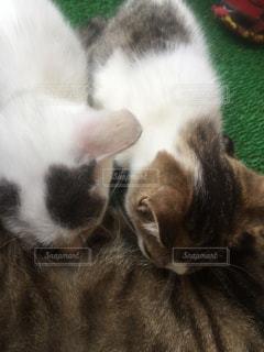 子猫の写真・画像素材[702608]