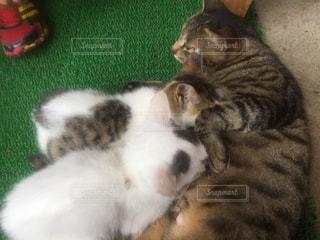 おっはいをあげてる猫の写真・画像素材[754637]