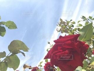 花のクローズアップの写真・画像素材[2203559]