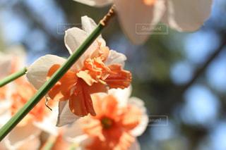 花のクローズアップの写真・画像素材[2203607]