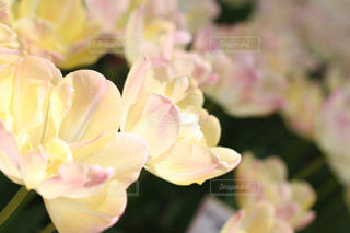 花のクローズアップの写真・画像素材[2203627]