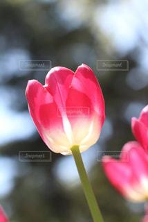 花のクローズアップの写真・画像素材[2203628]