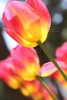 花のクローズアップの写真・画像素材[2203629]