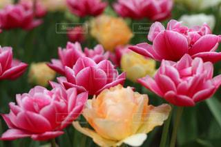 花のクローズアップの写真・画像素材[2203630]