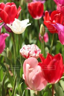 花のクローズアップの写真・画像素材[2203631]
