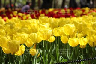 花のクローズアップの写真・画像素材[2203632]